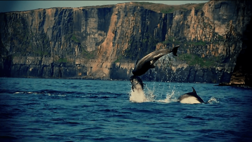 dark-side-of-the-lens-whales-1