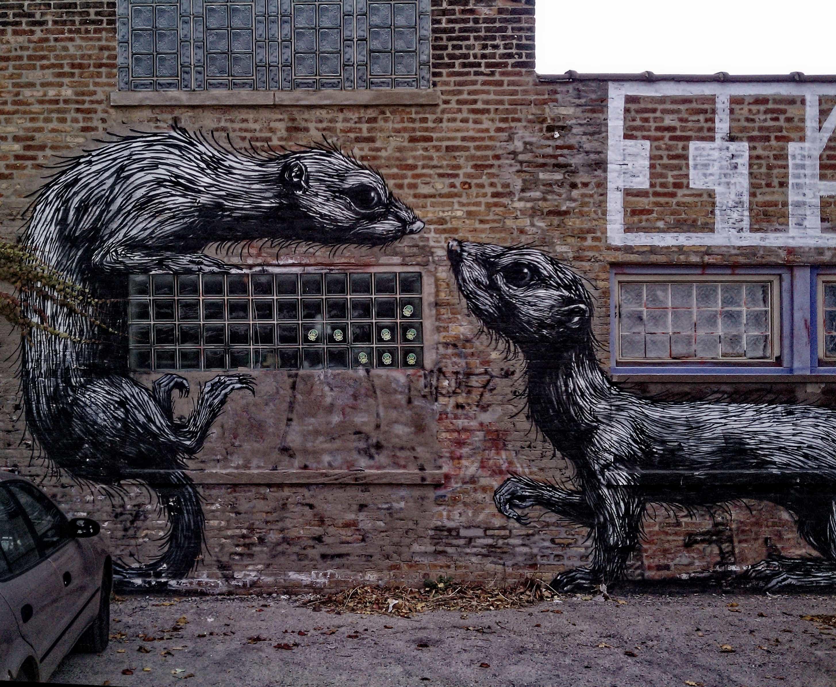 Rats-Fighting-johnpaulgoguen-CC.jpg