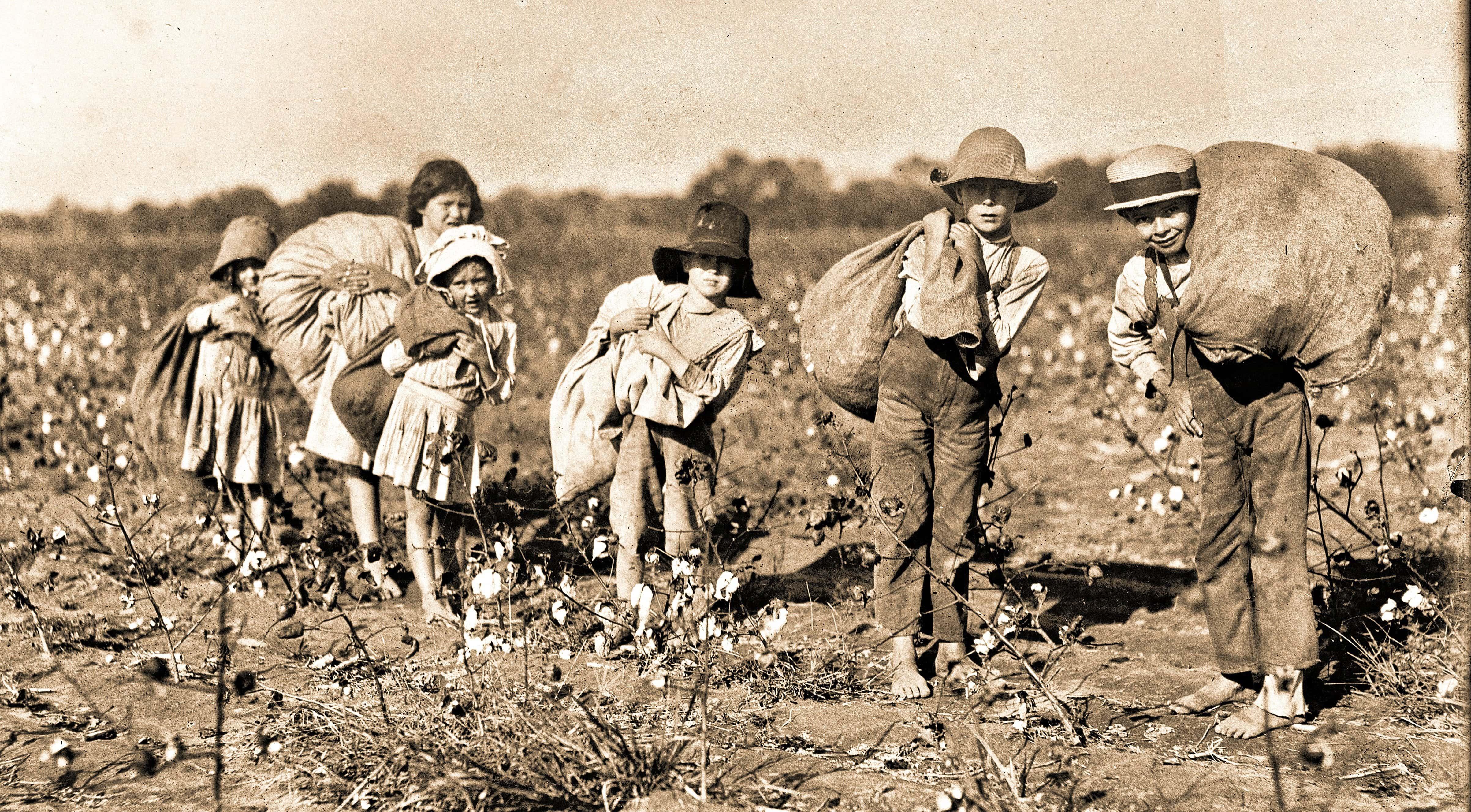Children-Picking-Cotton-United-States