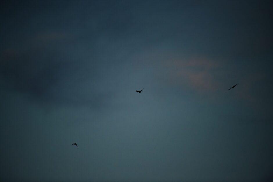 Birds fly in evening sun