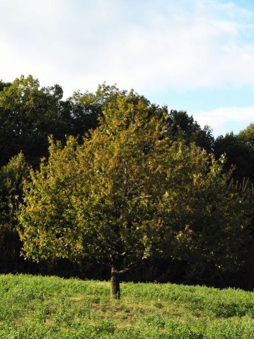 Summer-Tree-P1020512-1