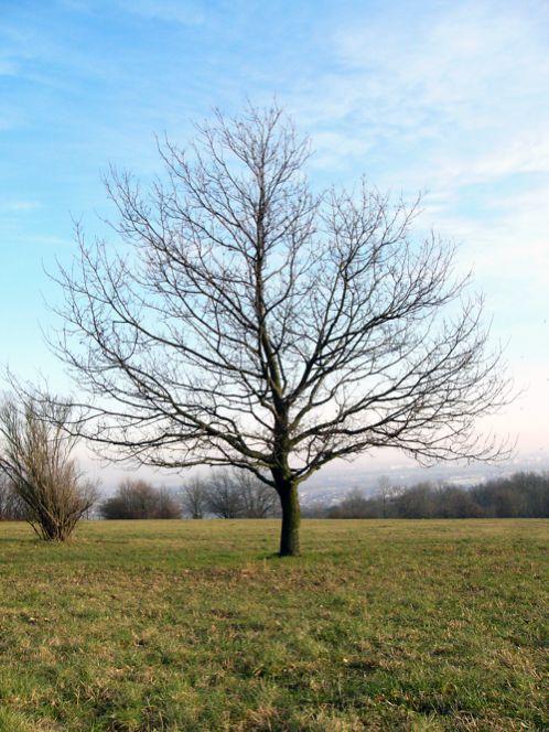 Winter-Tree-P1040554-1